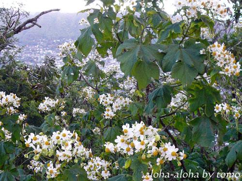 タンタラスの丘の花2