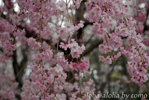 円山公園2.jpg