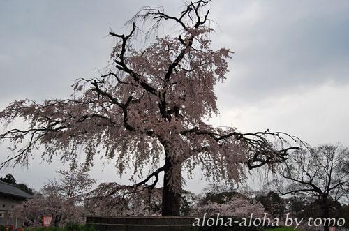 円山公園3.jpg